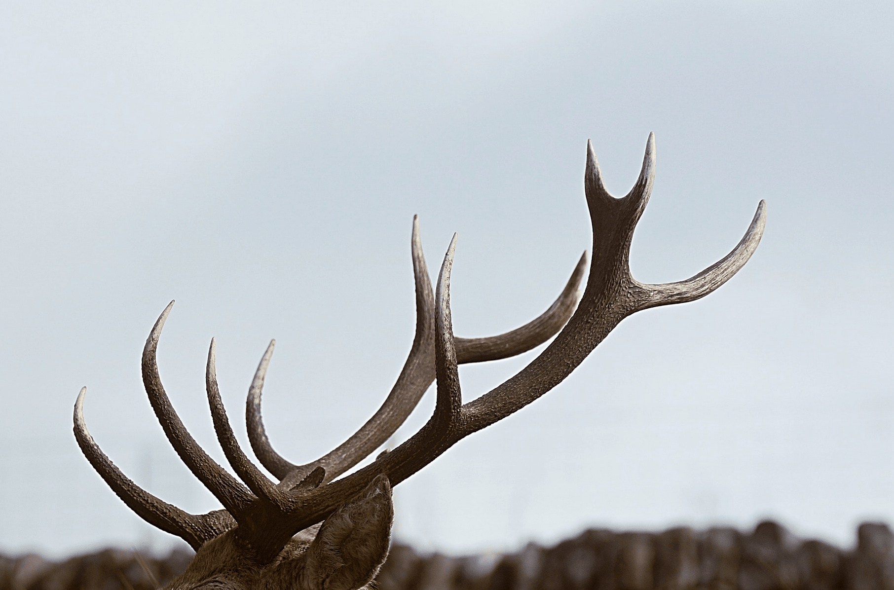 Jagtrejser